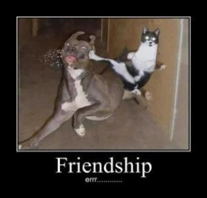 Funny friendship quotes to make you laugh (17)