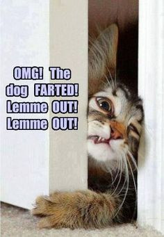 Dog farts are bad. Lol More