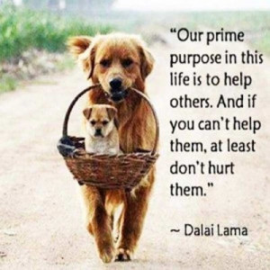 ... And If You Can't Help Them At Least Don't Hurt Them - Animal Quote