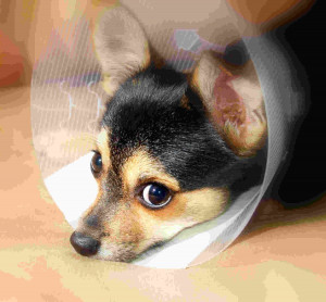 Getting a Shelter Pet: Don't Forget Pet Insurance » sick-dog