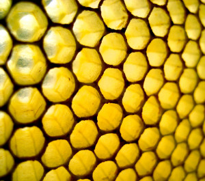 The comb of the hive bee is absolutely perfect. – Charles Darwin