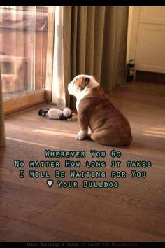 American Bulldog Quotes