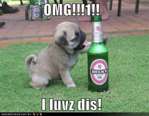 ... dog-pictures-pug-loves-beer_drunk_animals_drinking_beer_dogs_cats.jpg