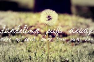 Dandelion Quotes Pictures