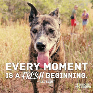 "Every moment is a fresh beginning."" ~T.S. Eliot 