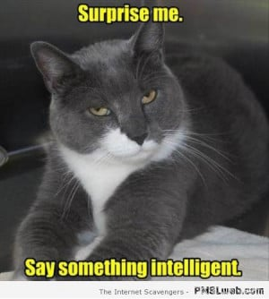 Funny Sarcastic Cat Quotes