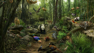 Forest Animals Pictures Animal Pictures for Kids with Captions to ...