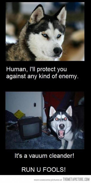 Funny photos funny husky dog vacuum cleaner