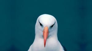 Seagulls Flight Wallpapers