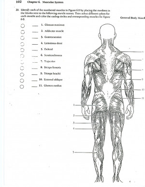 anatomy muscles coloring pages free - photo#28
