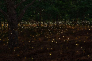 See fireflies, maybe catch some in a jar
