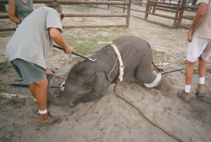 Circus Animals: Torturing Babies for YOUR pleasure!