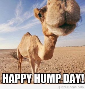 Funny happy hump day picture quote