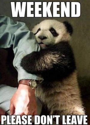 Animal Memes – Please don't leave