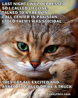 best new funny pictures cat feels depressed