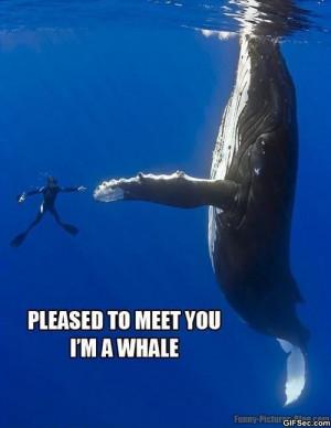 im-a-whale.jpg