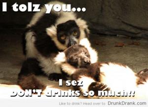 tags animal drinking drunk funny lemur