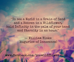 wiliam blake wildflower quote