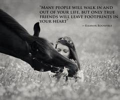 Horse Quotes About Friendship (13)