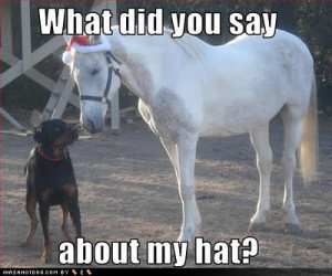 Funny Horse Quotes And Jokes Free funny horse pictures,
