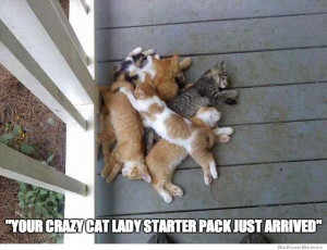 Your Crazy Cat Lady Starter