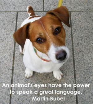 Some inspiration- PUPPY DOG EYES.
