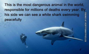 Funny Picture - The most dangerous animal in the world and a white ...