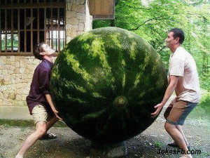 Funny Picture Of Watermelon