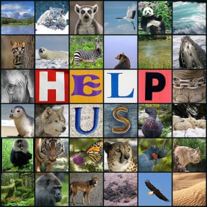 ... www.endangered.org/campaigns/protecting-the-endangered-species-act