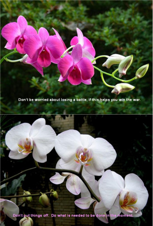Orchids with English quotations _蘭花