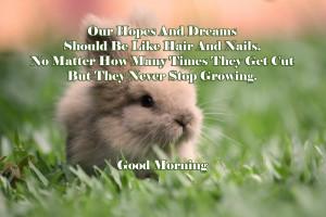 rabbits-rabbits-picture-8e400