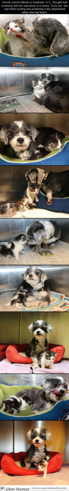 Dog finds a tiny kitten, risks everything to save her.