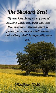 Bible Quotes About Seeds Quotesgram