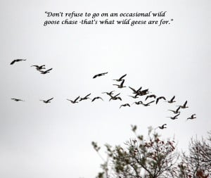 ... quotes! I've used my own photo of a flock of geese and edited it to