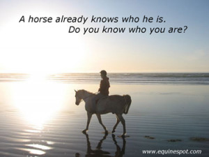 show horse quotes and sayings