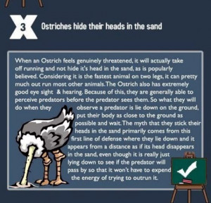 Myth-Ostriches+hide+their+heads+in+the+sand.jpg
