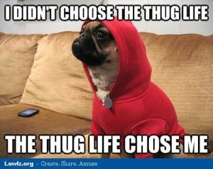 didnt-choose-the-thug-life-the-thug-life-chose-me-pug-dog-red ...