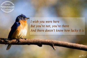 bird-sad-quotes-lonely-quotes-loneliness-missing-you-quote-quotations ...
