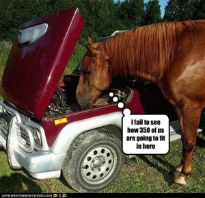 horse quotes sayings