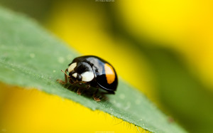 Different Lady bug Wallpapers