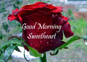 ... grabbed my cell phone and sent you a morning greeting. Good Morning