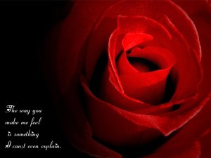 The way you make me feel..rose quotes for love