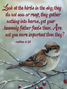 Look at the birds of the air, for they neither sow nor reap nor gather ...