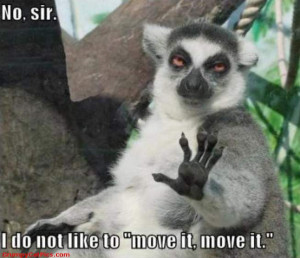 Real Life Ice Age Animals Funny Wild Animal Picture Nice Caption >