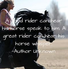 Horse And Rider Quotes Tumblr (28)