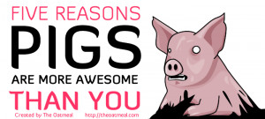 reason why pigs are more awesome than you