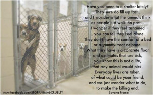Have you been to a shelter lately? Please GO to a Shelter & ADOPT!!!!
