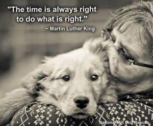 The time to do right, is right now! Repin and follow National Mill Dog ...