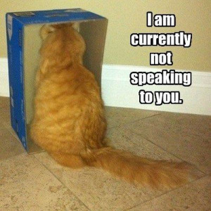 ... Funny Animals , Funny Pictures // Tags: Funny cat in a bad mood // May