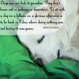 Go Back > Images For > Dog And Cat Love Quotes